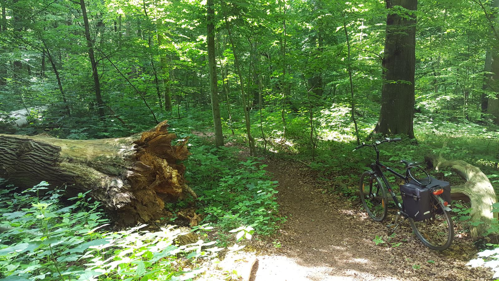 Erholung im Wald - Elisenhain in Greifswald-Eldena