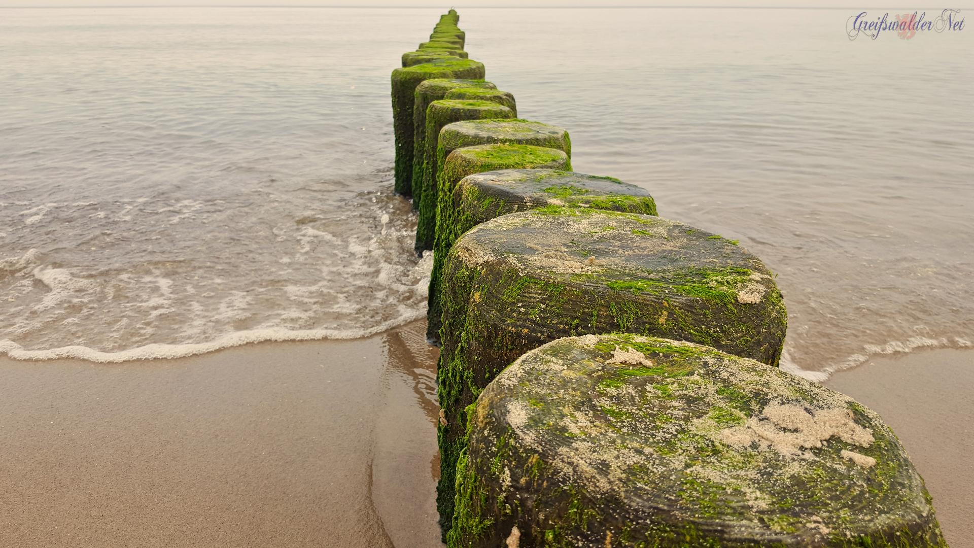 Bune an der Ostsee