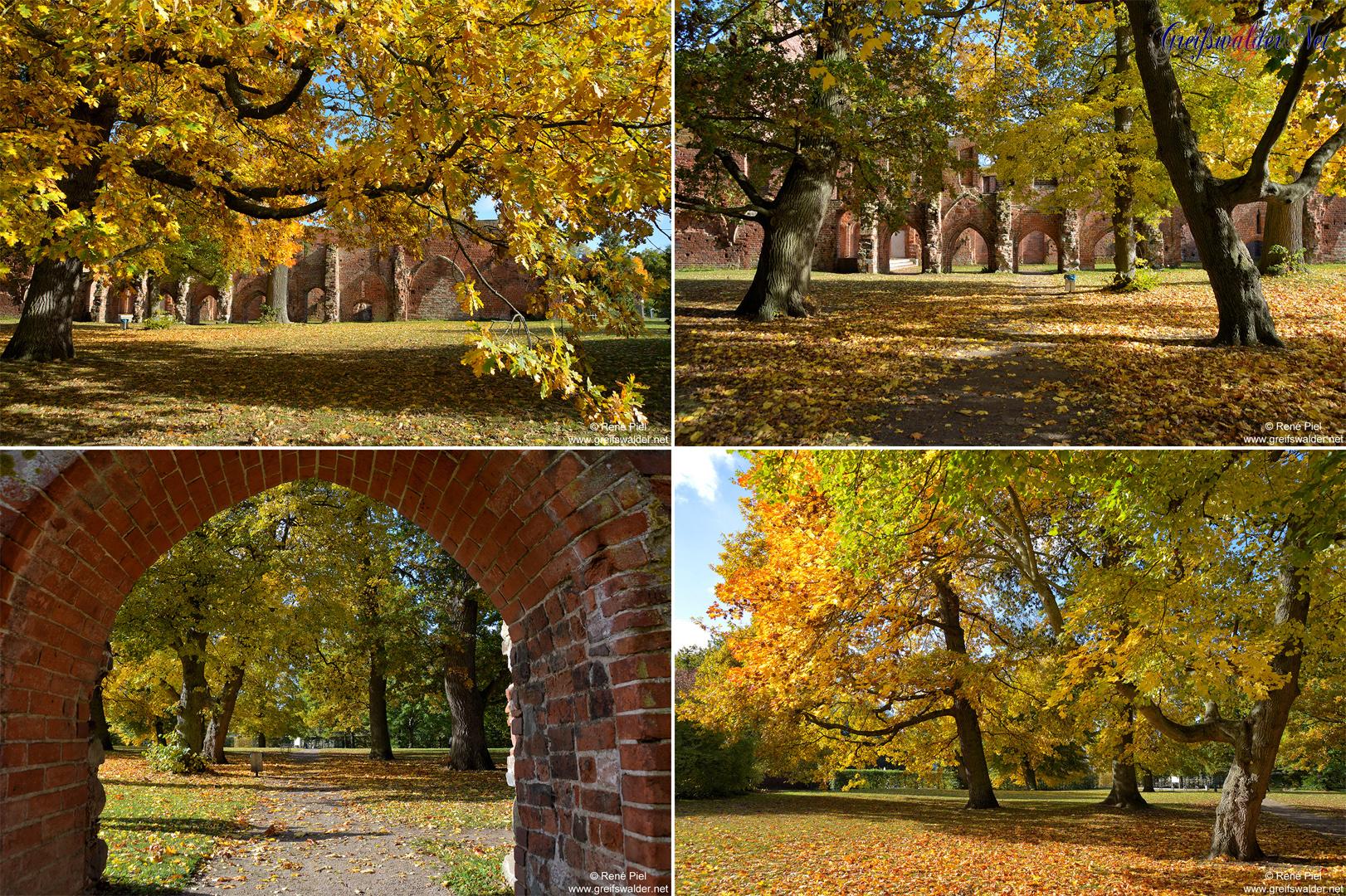 Herbst in der Klosterruine in Greifswald-Eldena