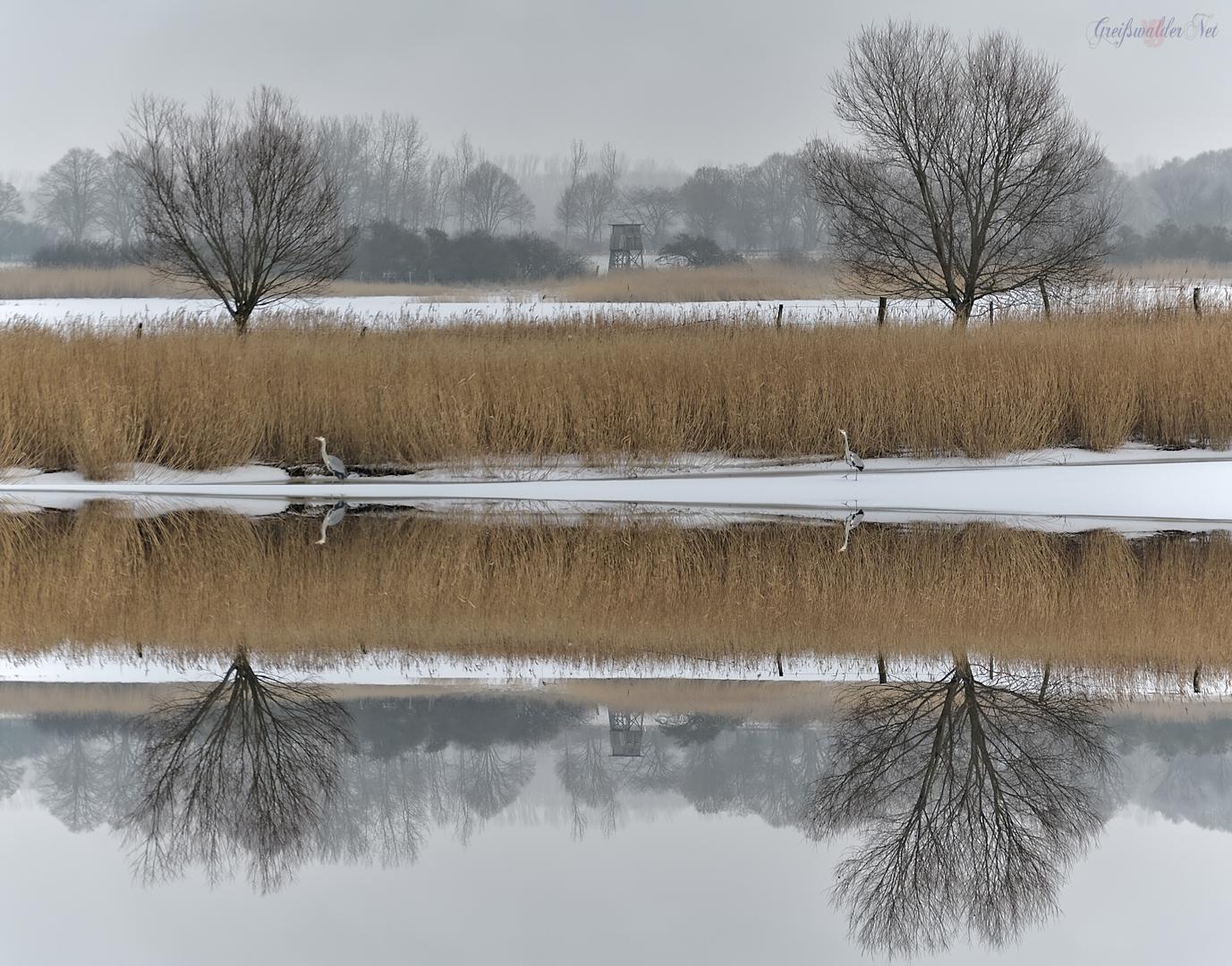 Winter am Ryck