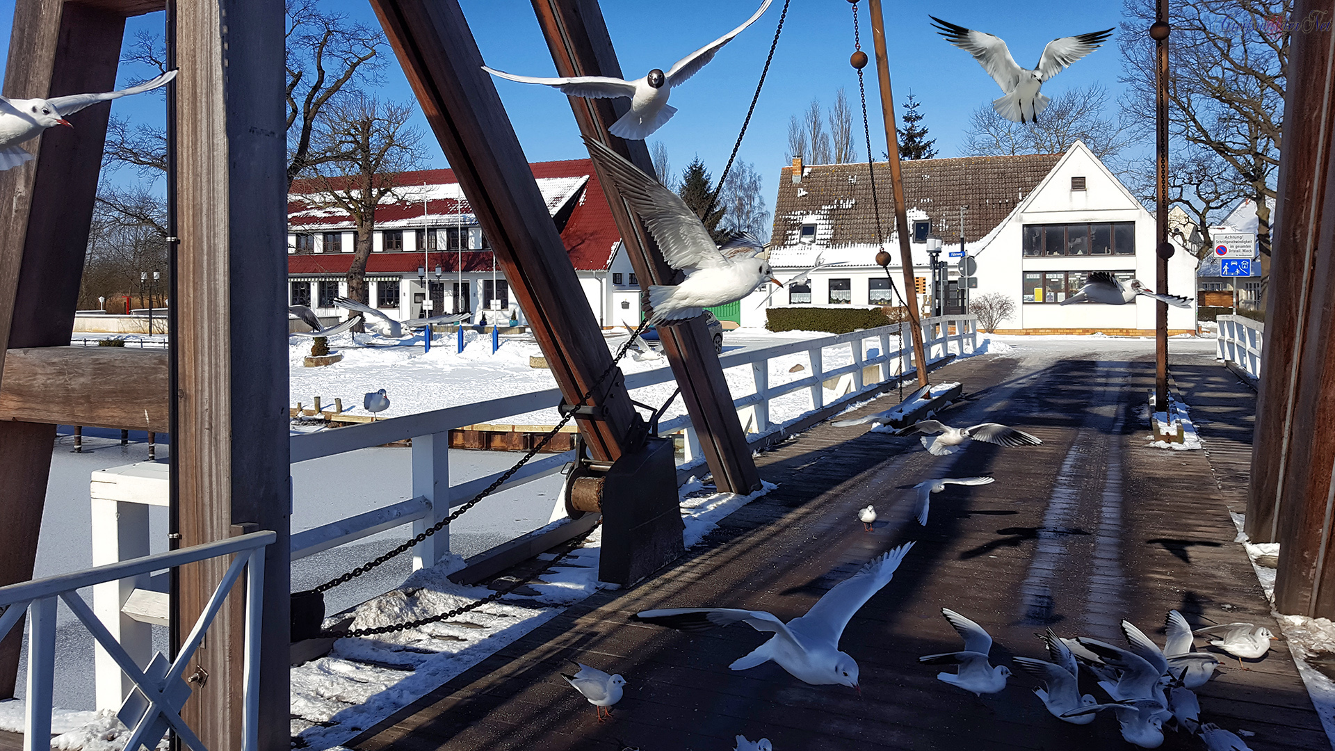 Möwen an der Brücke in Greifswald-Wieck