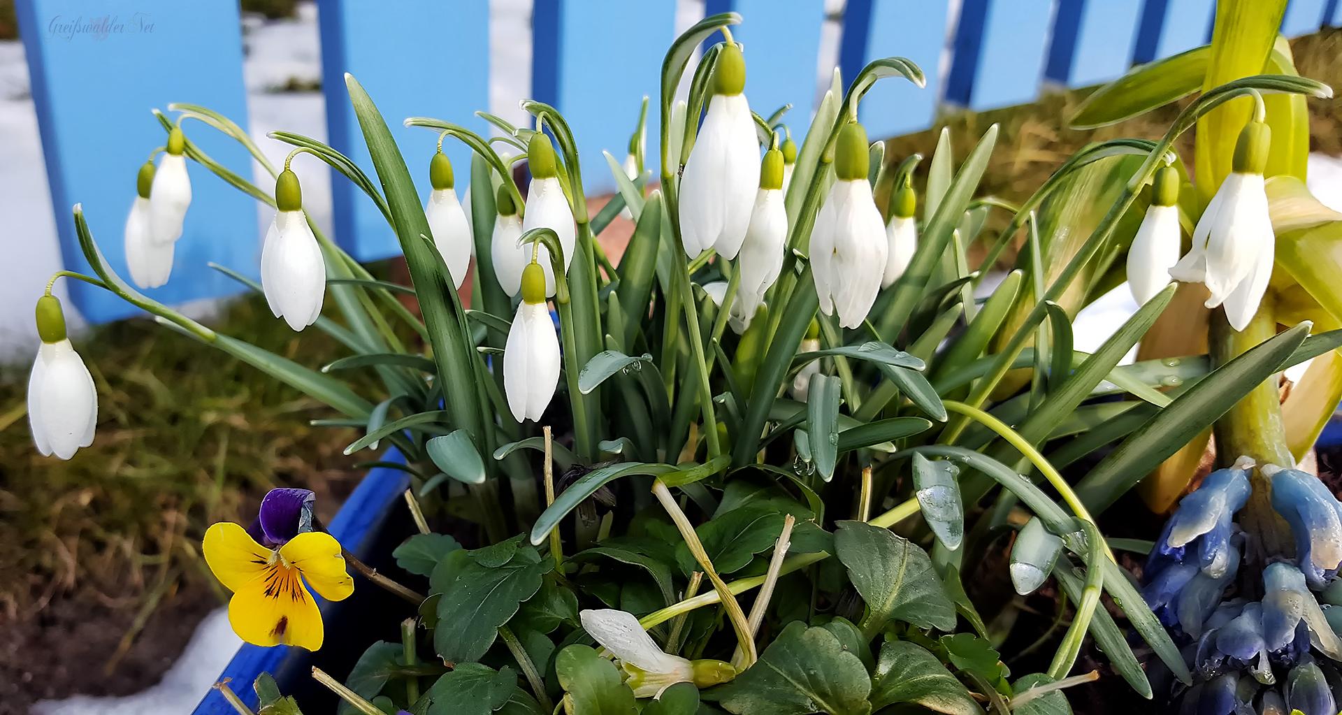 Der Schnee ist weg - der Frühling naht