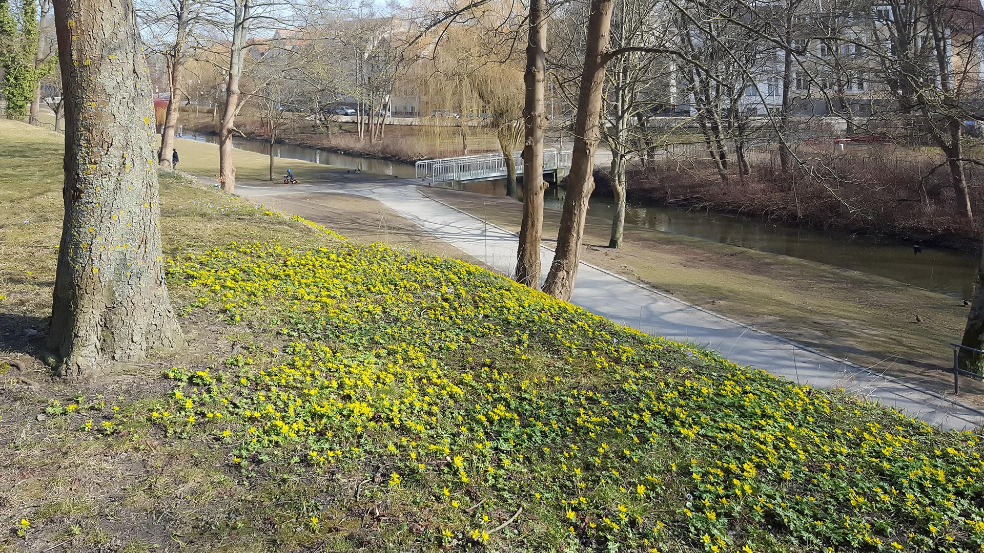 Frühling am Wall in Greifswald