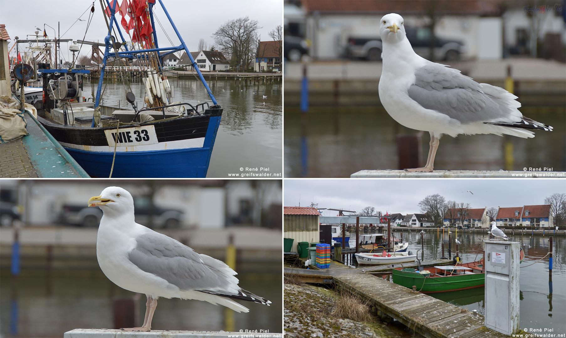 Warten auf Fisch in Greifswald-Wieck