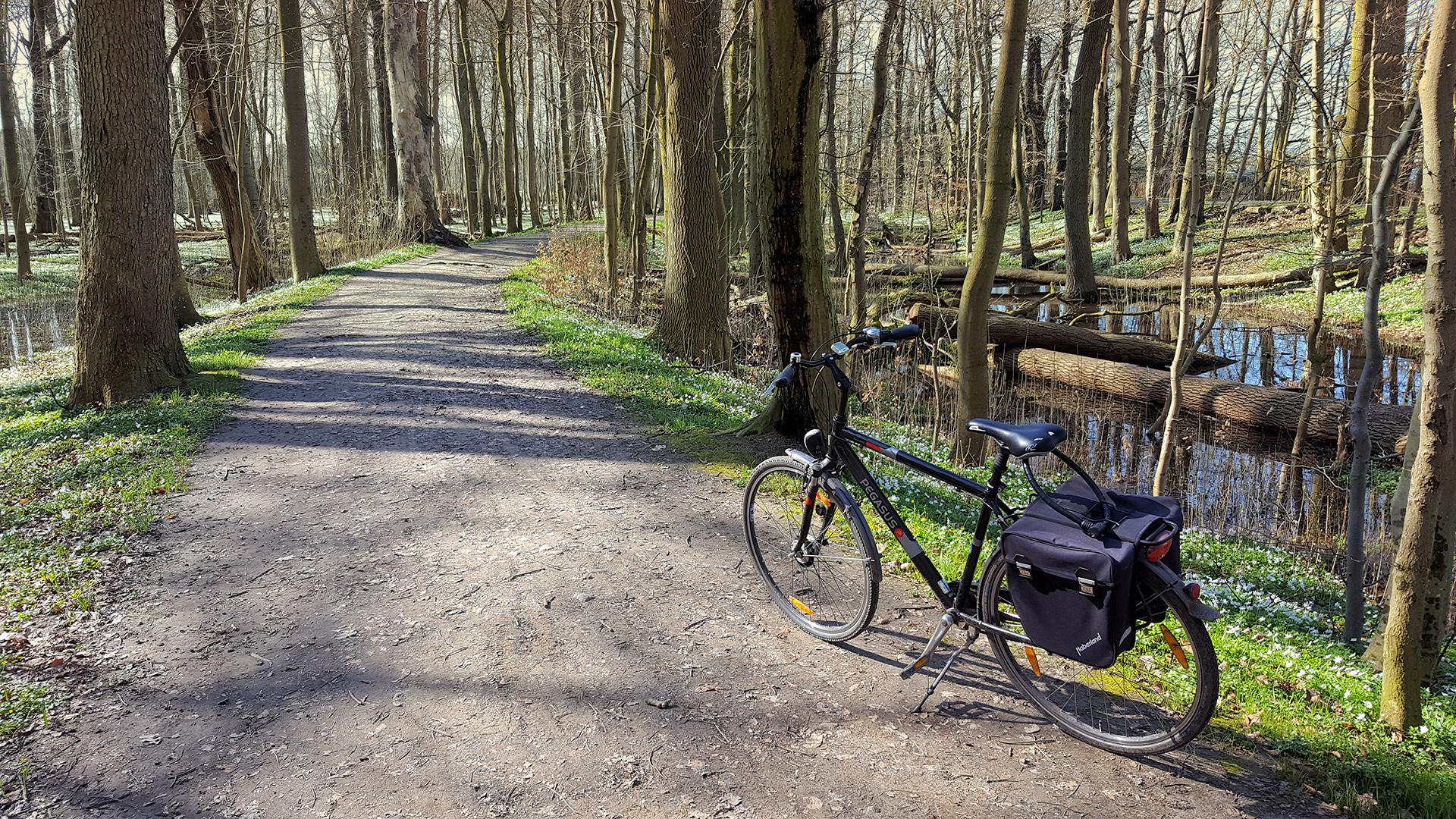 Fahrradtour im Wald
