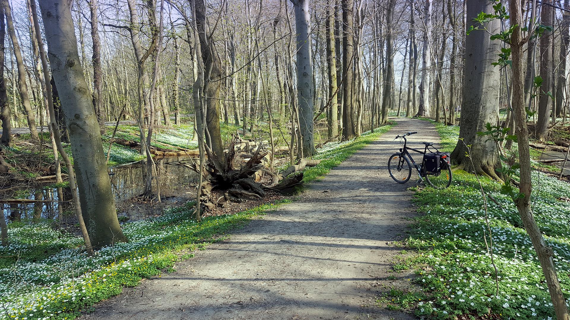 Fahrradtour im Elisenhain in Greifswald-Eldena