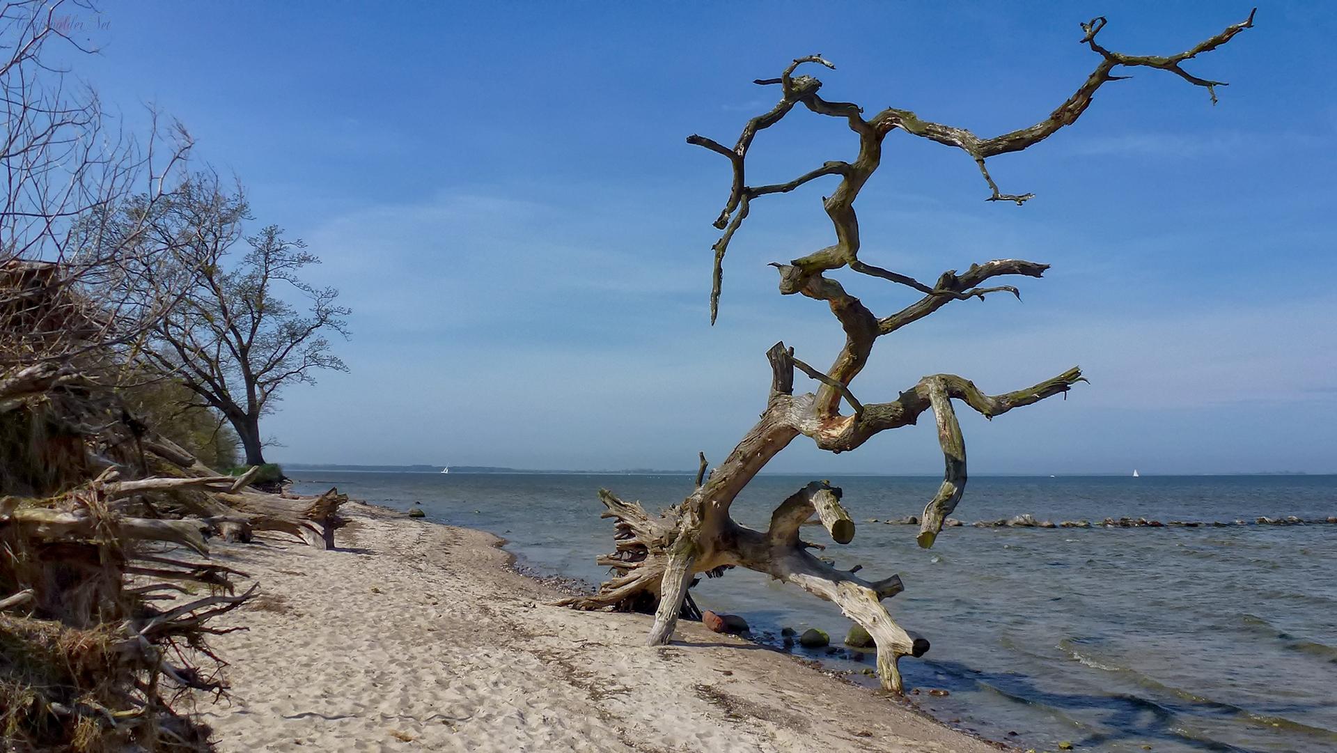 Am Greifswalder Bodden - schlafende Bäume am Strand bei Loissin