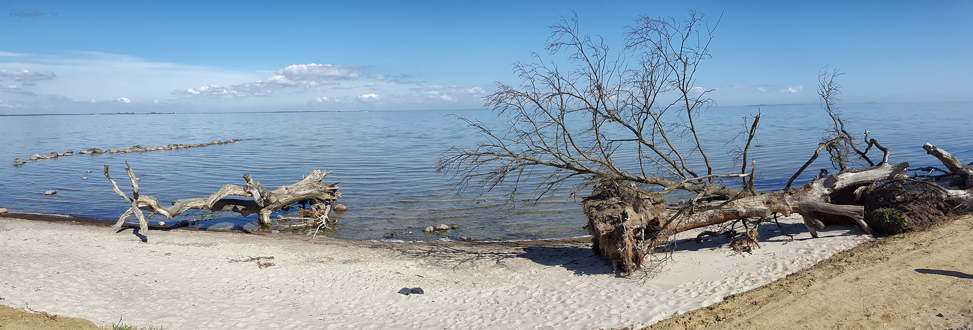 Schlafende Bäume am Strand bei Loissin im Frühling