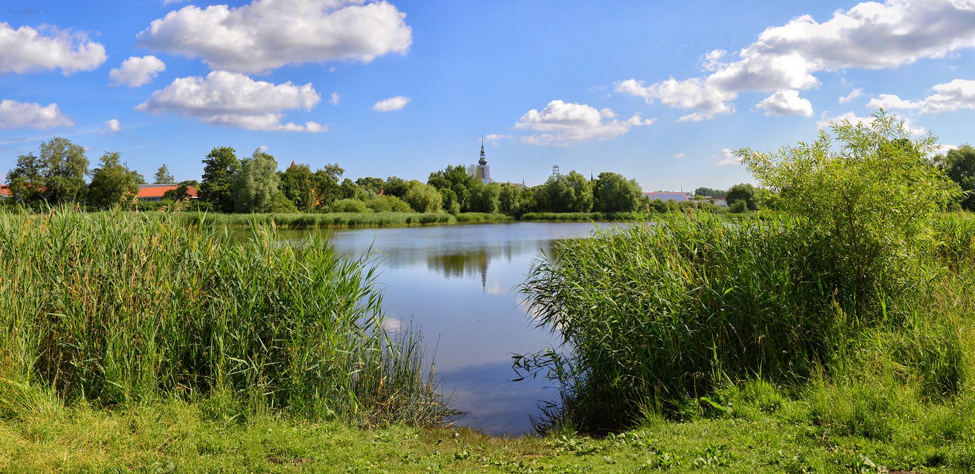 Natur am Rande der Stadt Greifswald