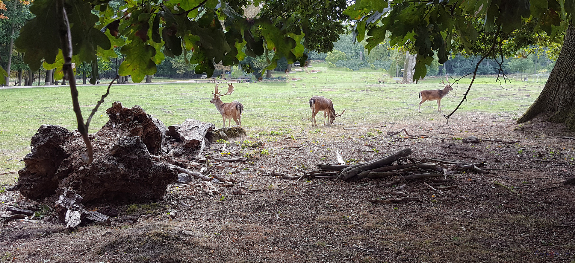 Hirsche auf einer Lichtung