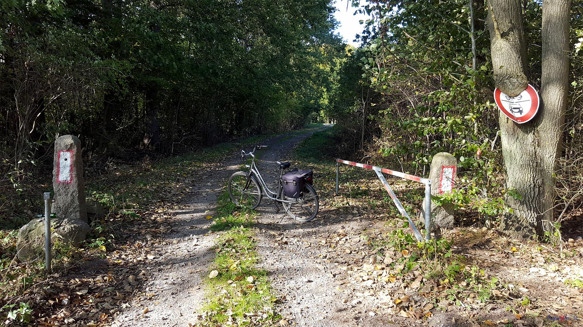 Waldweg - eingewachsenes Verkehrsschild