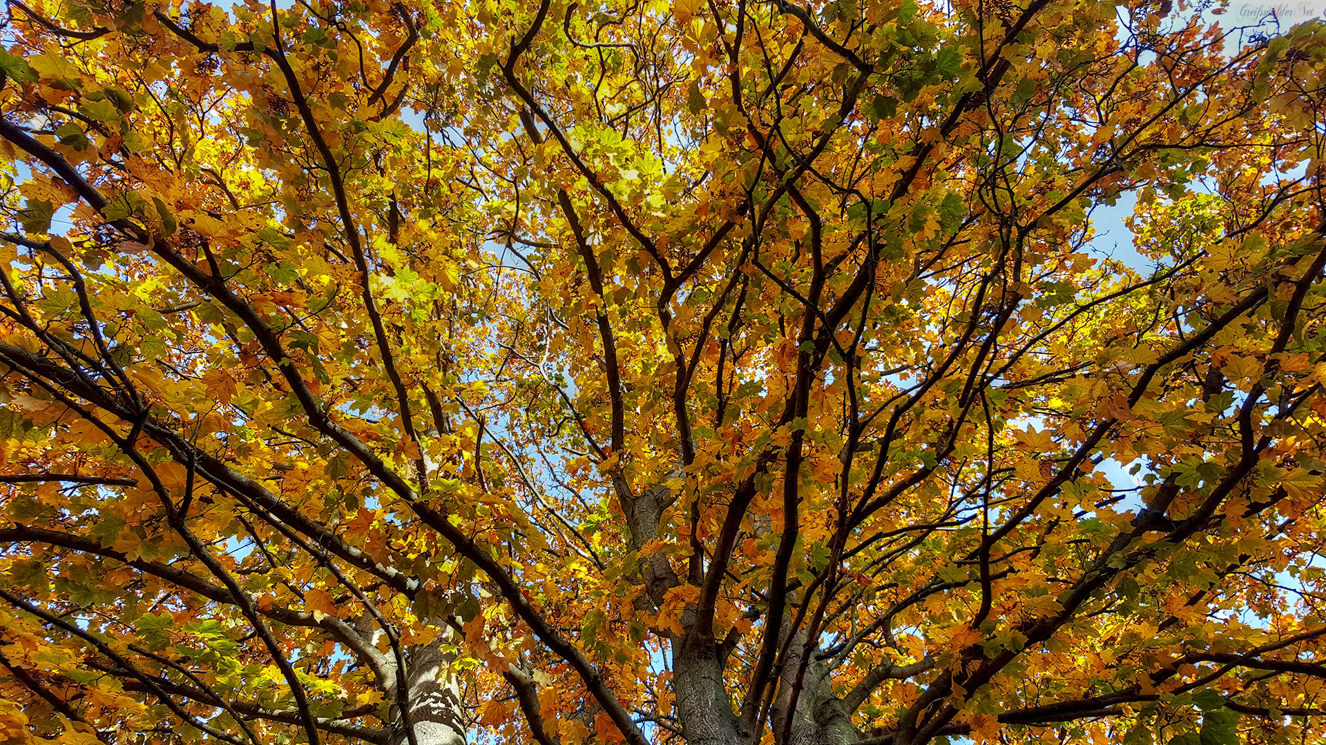 Buntes Blätterdach - Herbst Komposition