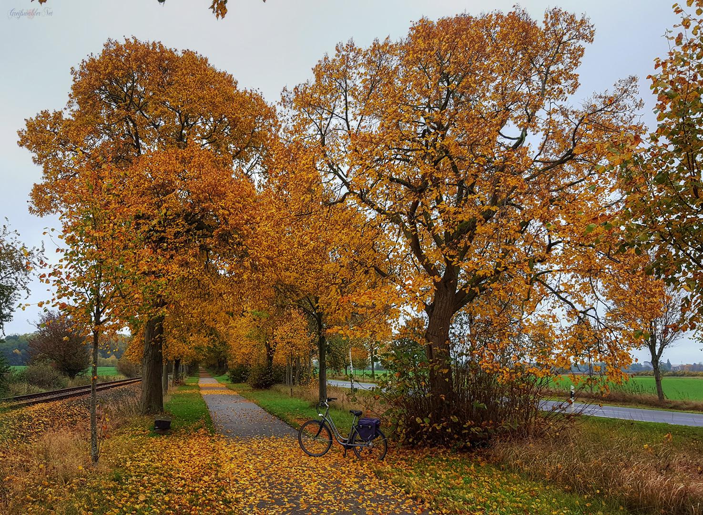 Herbstliche Fahrradtour