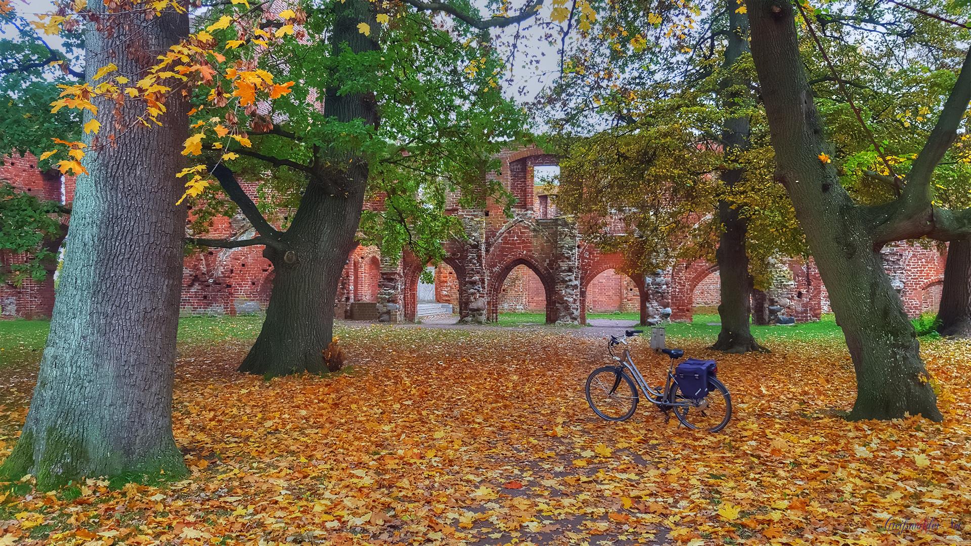 Herbst in der Klosterruine Greifswald-Eldena