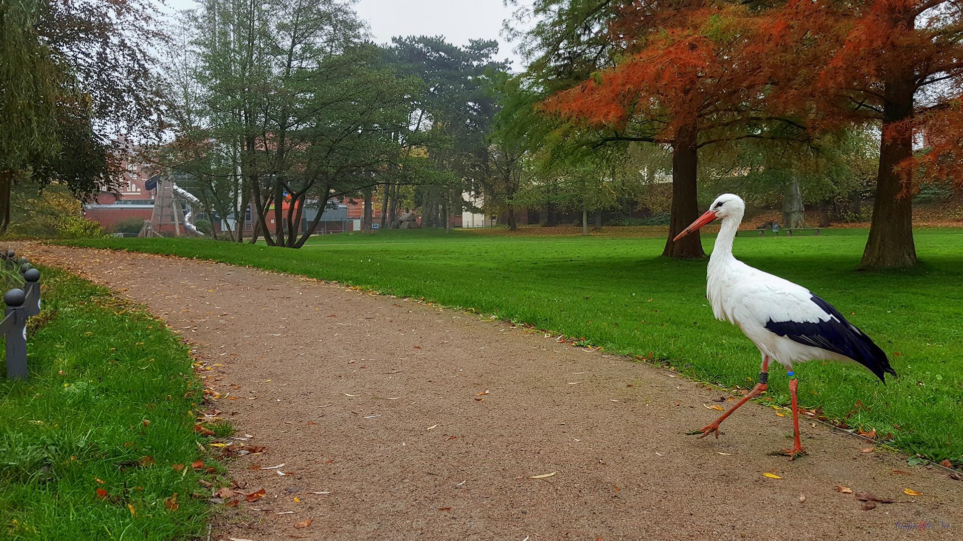 Spaziergang in den Credner-Anlagen in Greifswald