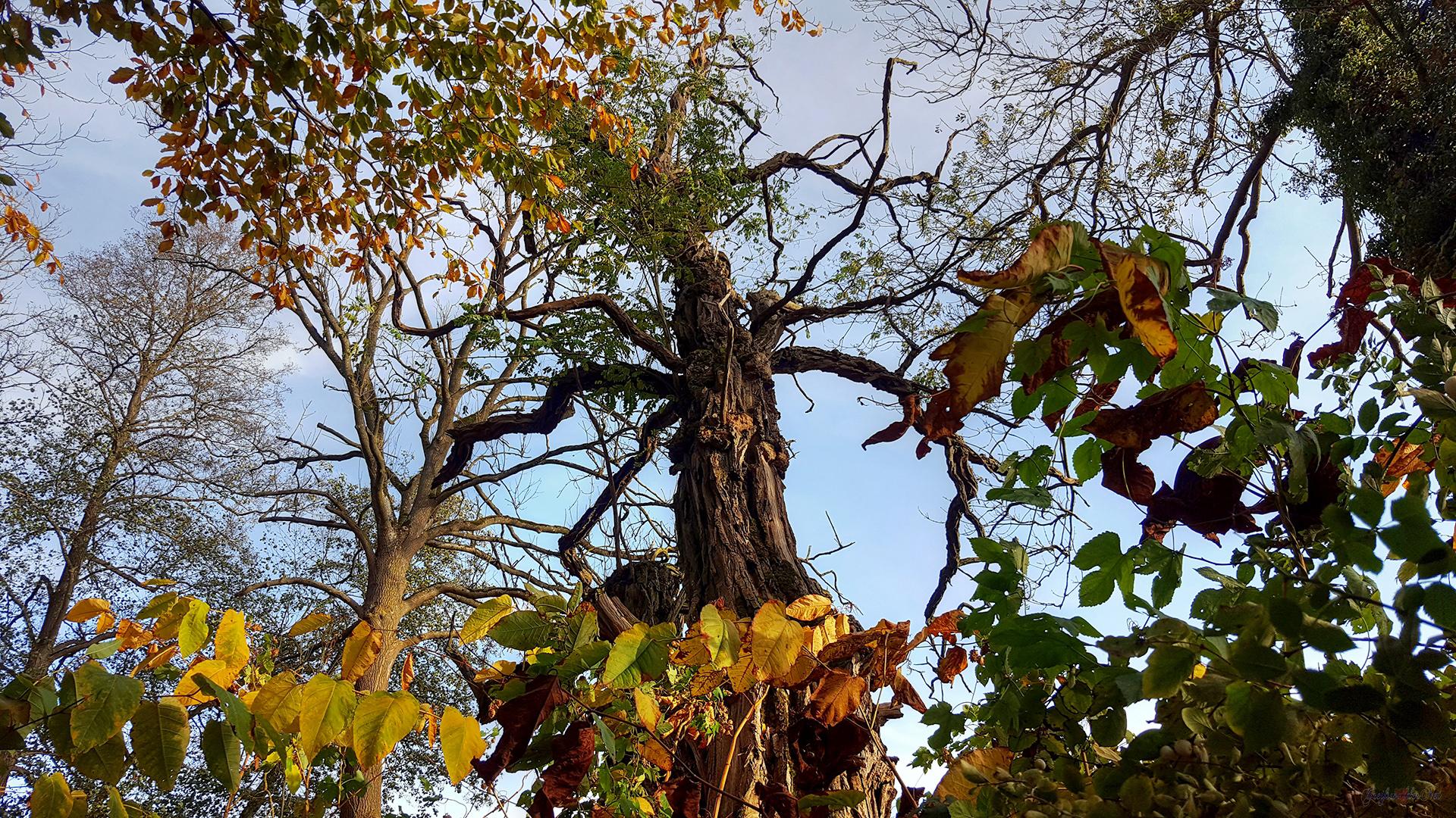 Herbststimmung im Schlosspark Karlsburg