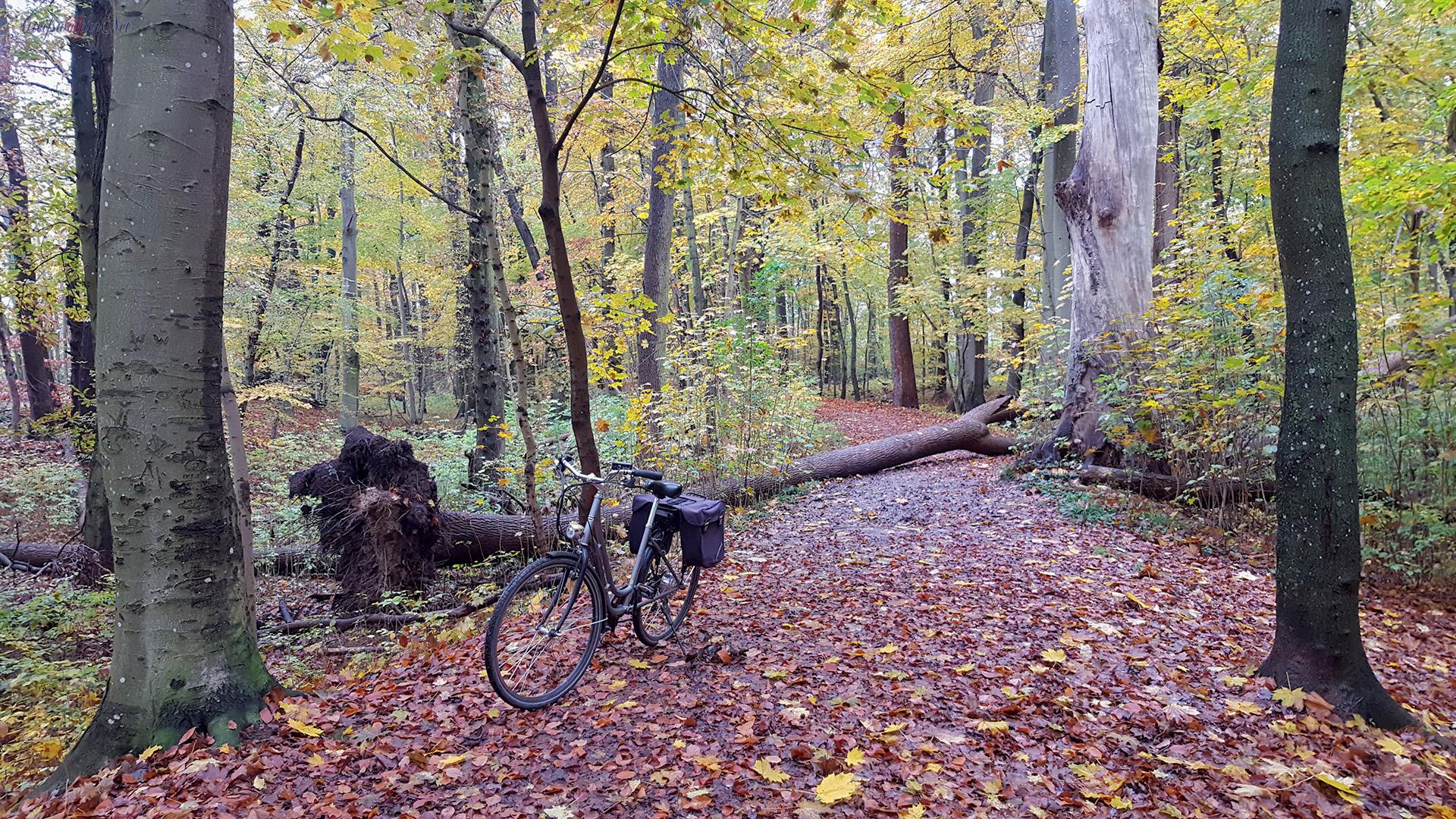 Fahrradtour im herbstlichen WAld