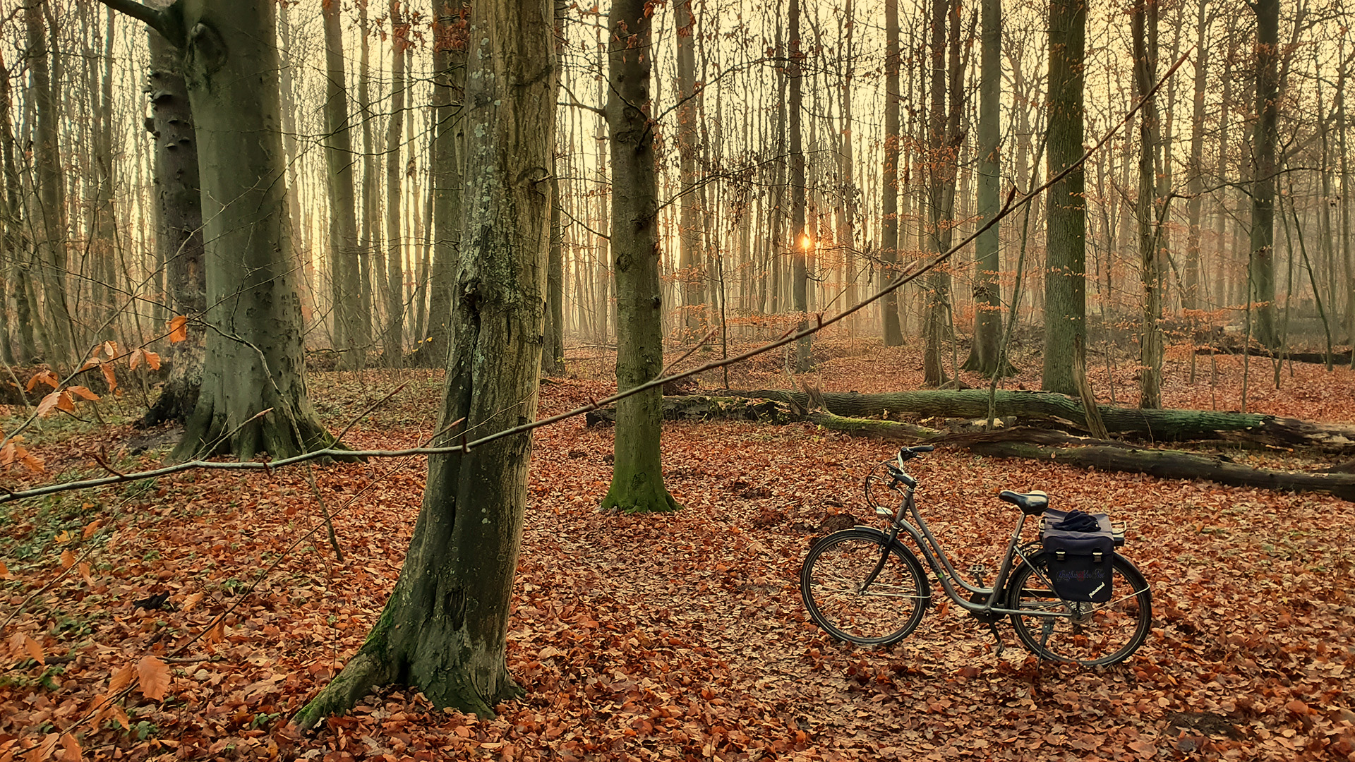 Fahrt durch den Herbstwald