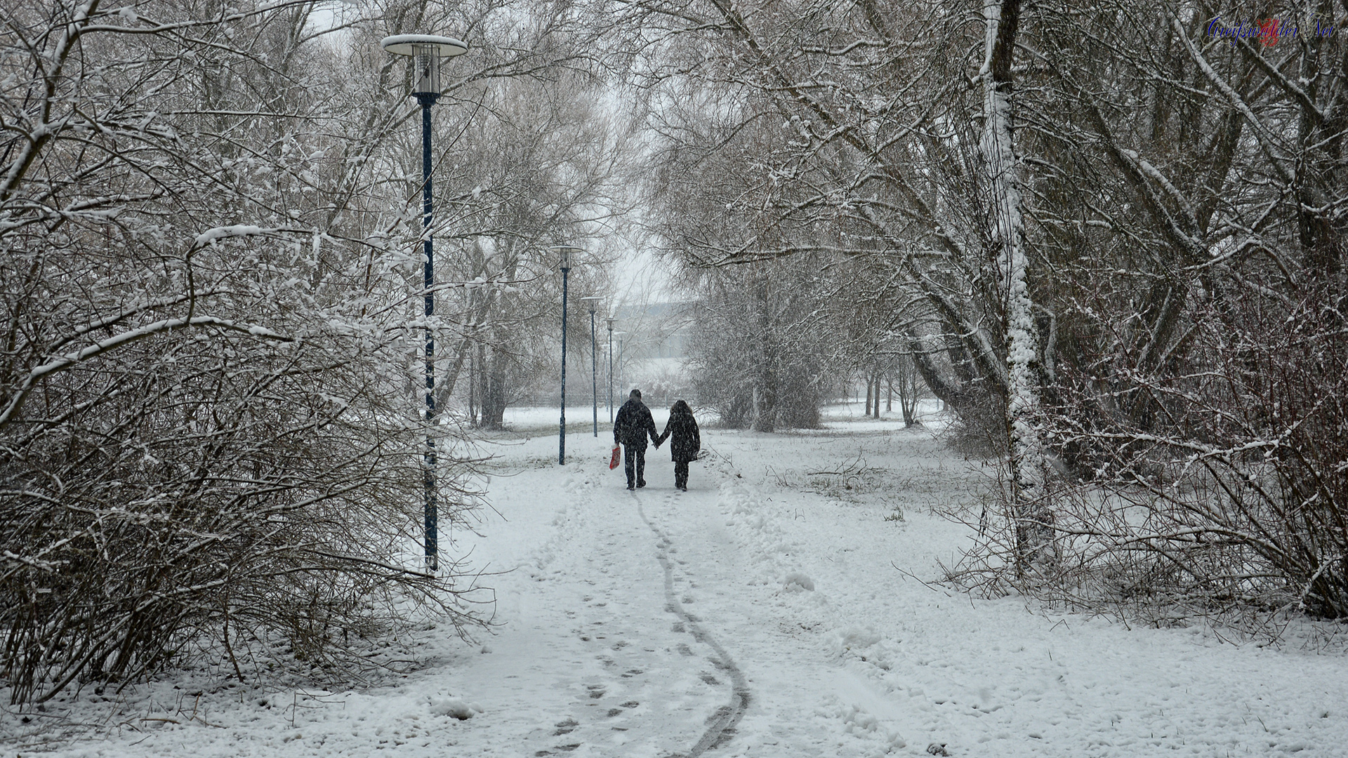 Winter am 31.01.2015, Stadtpark Greifswald
