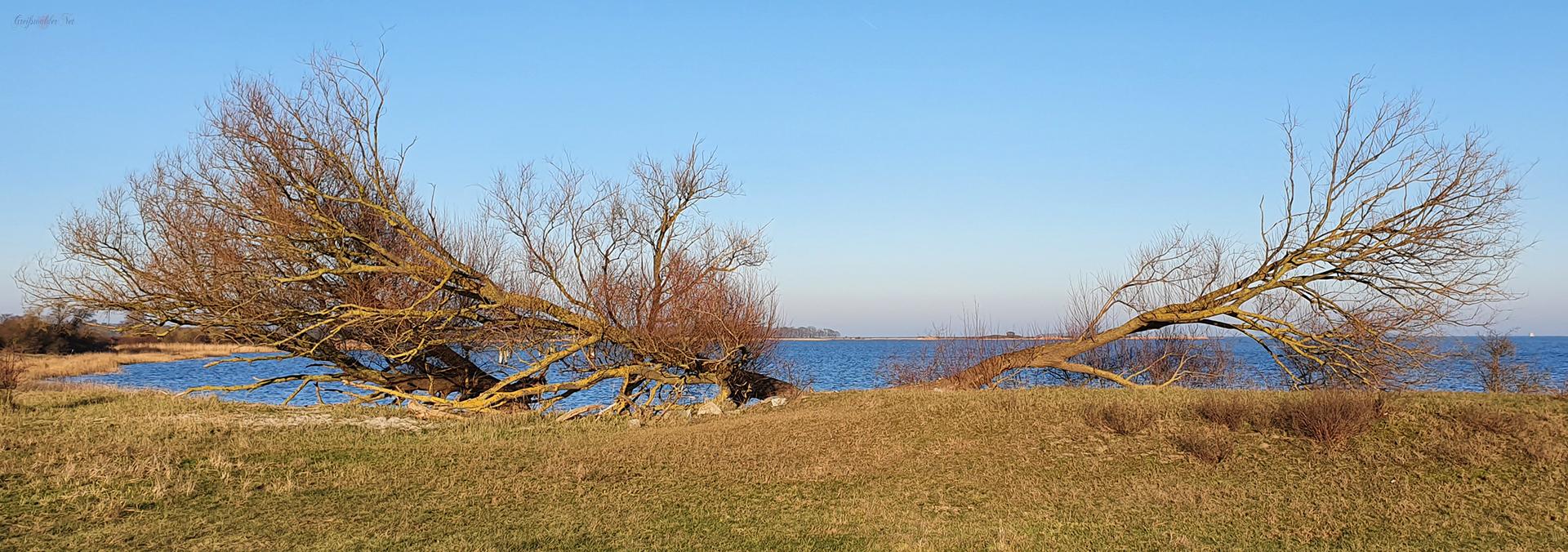 Naturschutzgebiet Peenemünder Haken, Struck und Ruden