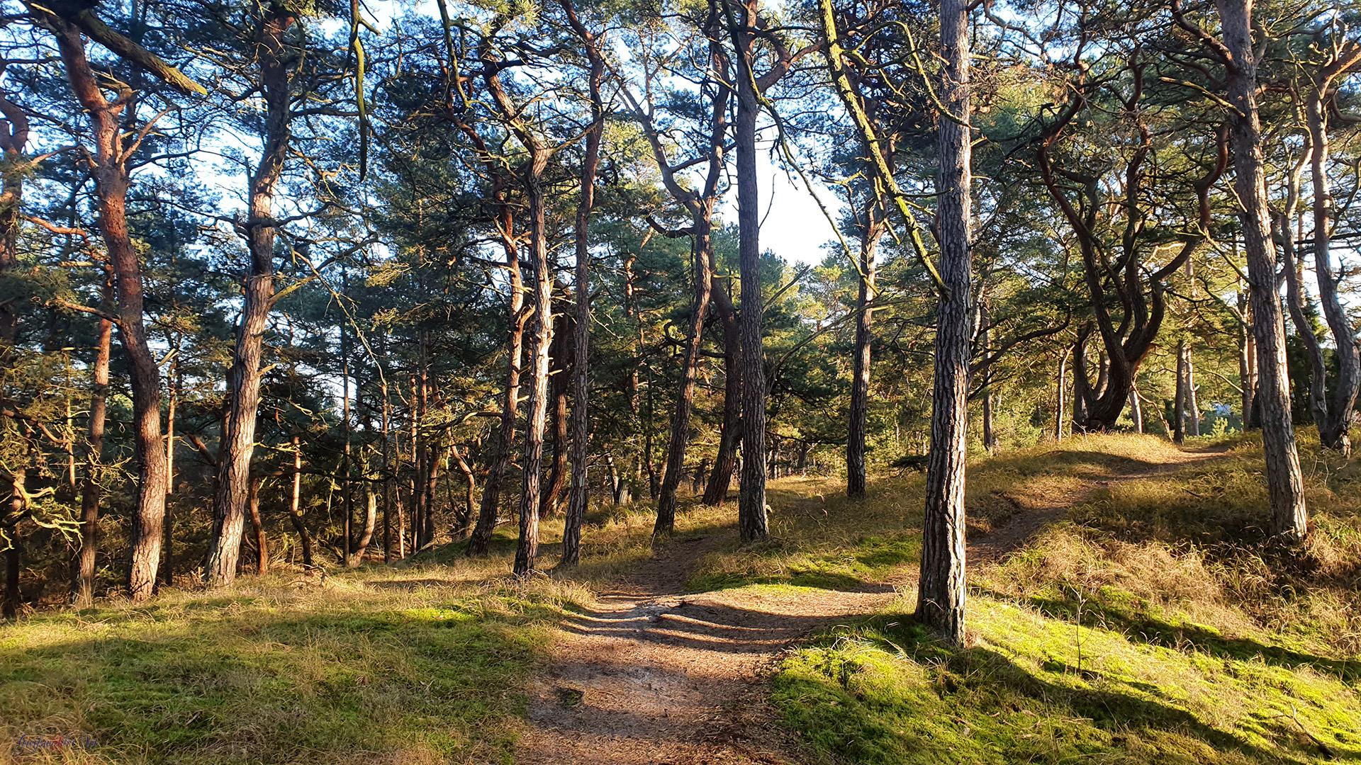 Spaziergang im Dünenwäldchen in Trassenheide