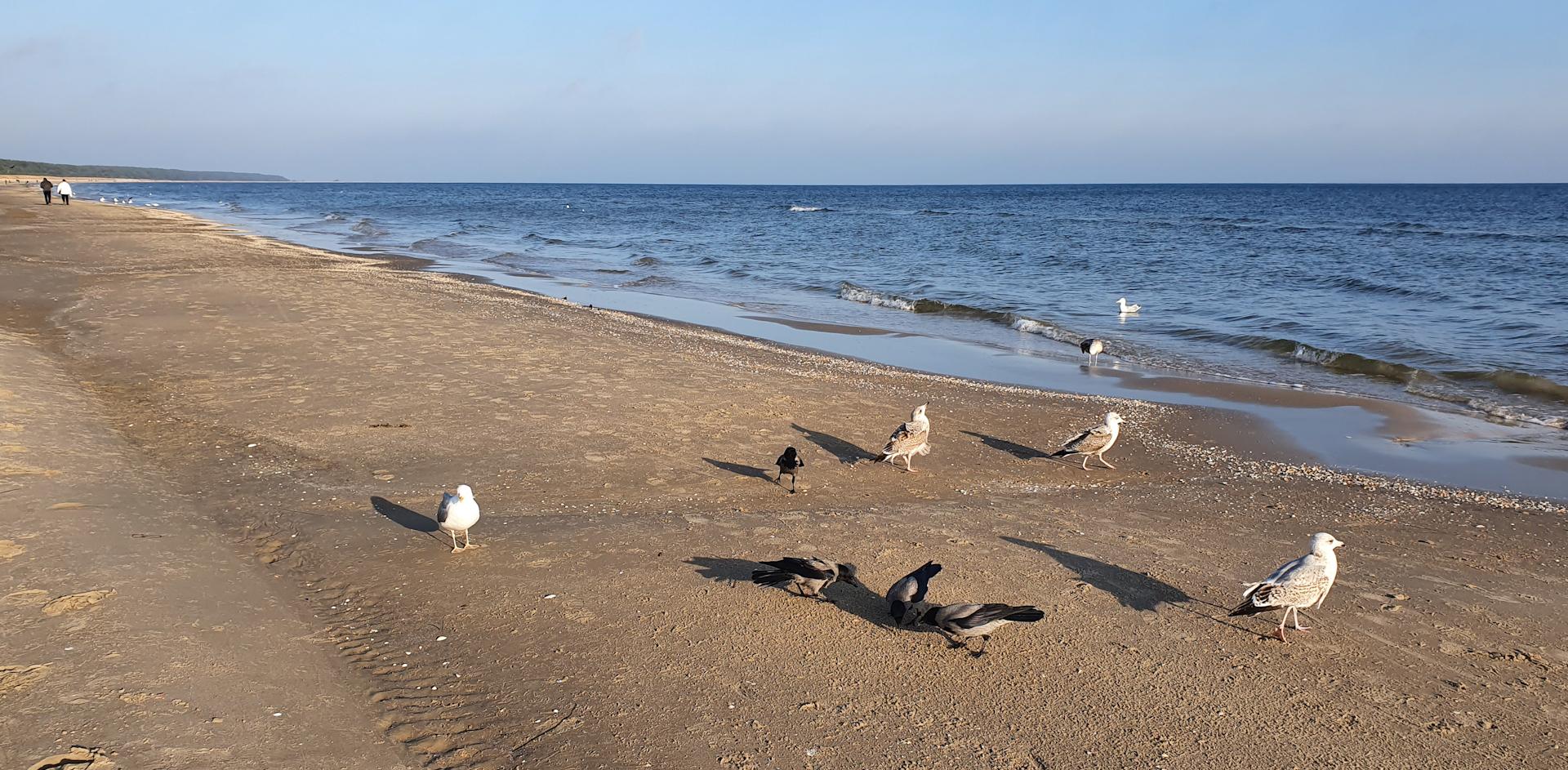 Strand zwischen Zinnowitz und Trassenheide