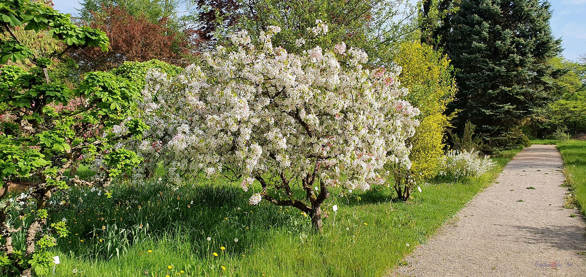 Arboretum des Botanischen Gartens Greifswald