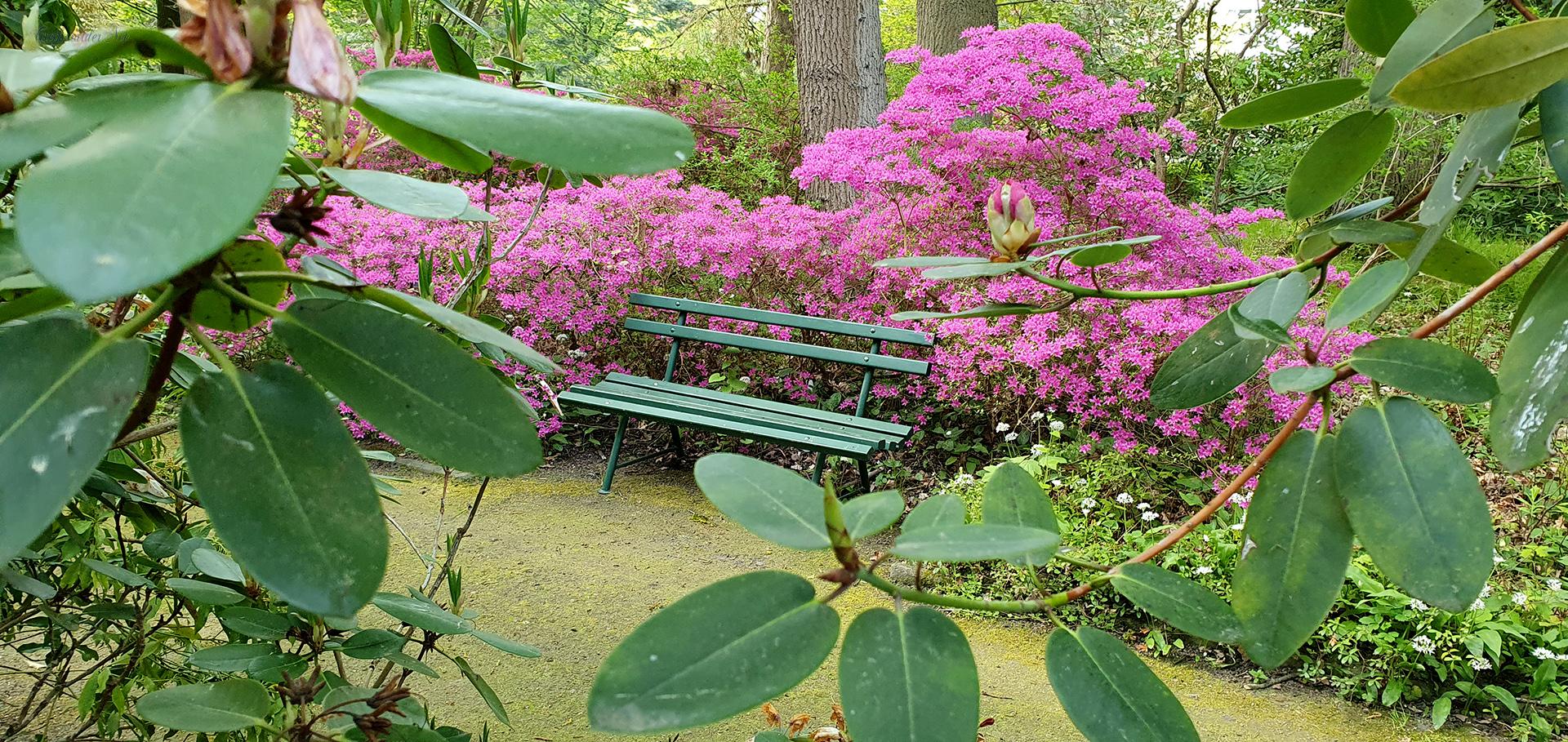 Wieder geöffnet: Arboretum des Botanischen Gartens Greifswald