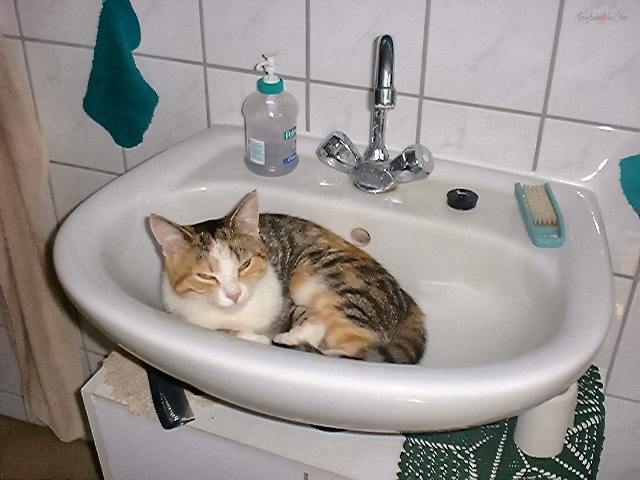 Kühles Plätzchen für die Katze