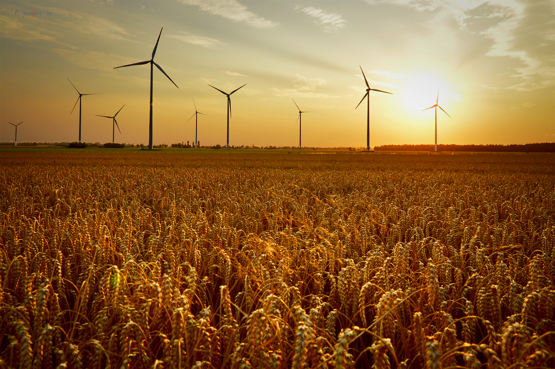 Windkraft Feld Sonne
