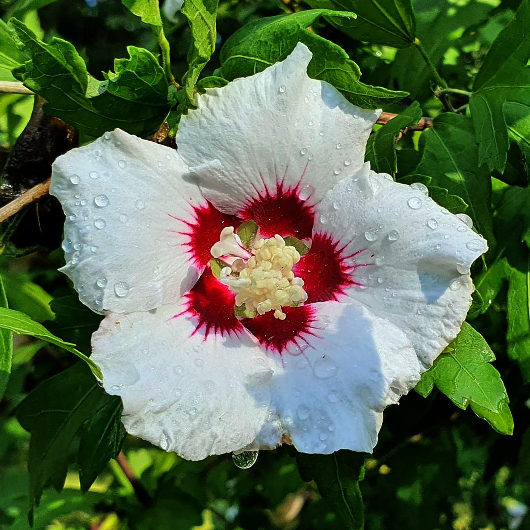 Spätsommerblumen