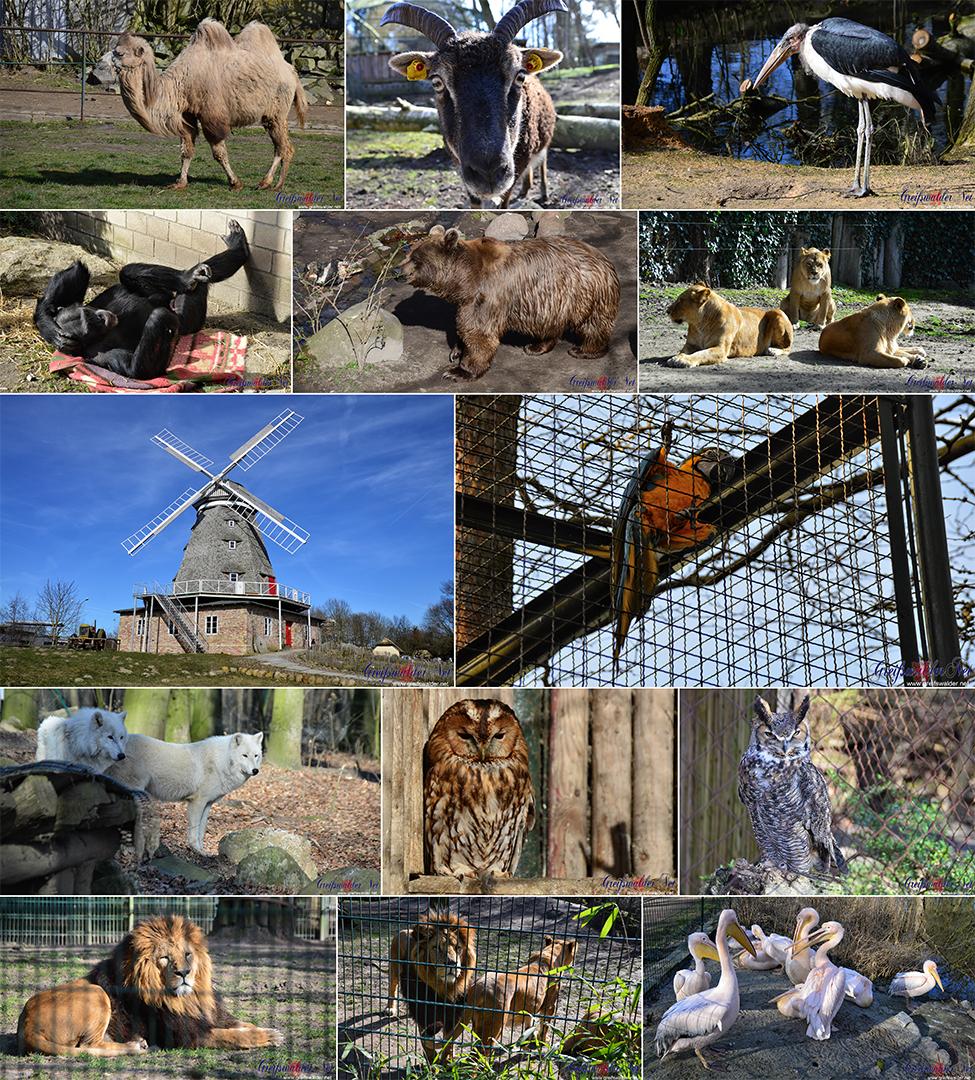 Zoo Stralsund