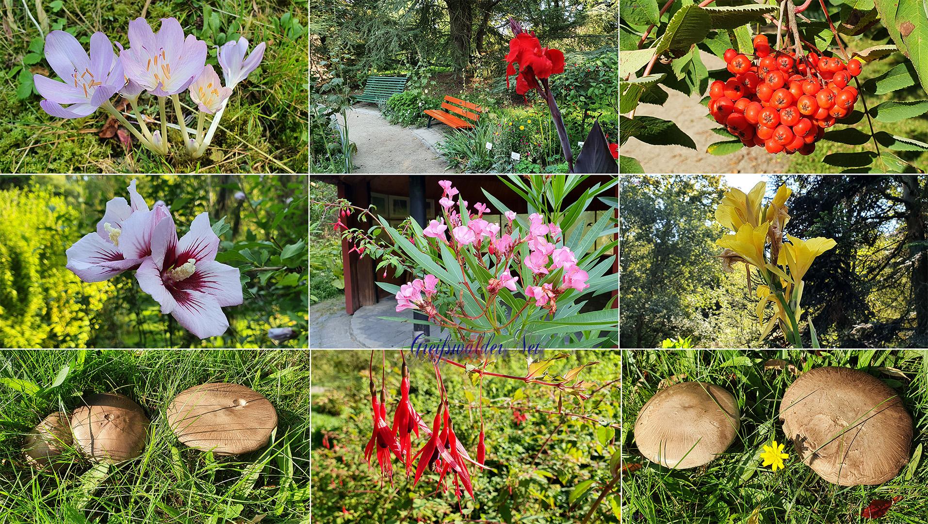 Frühherbst im Arboretum des Botanischen Gartens Greifswald