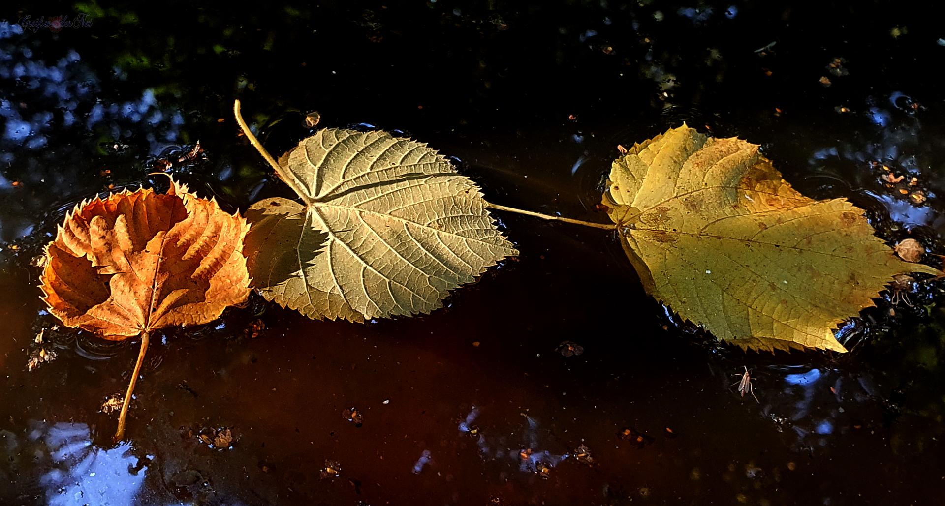 Frühherbst Herbstlaub