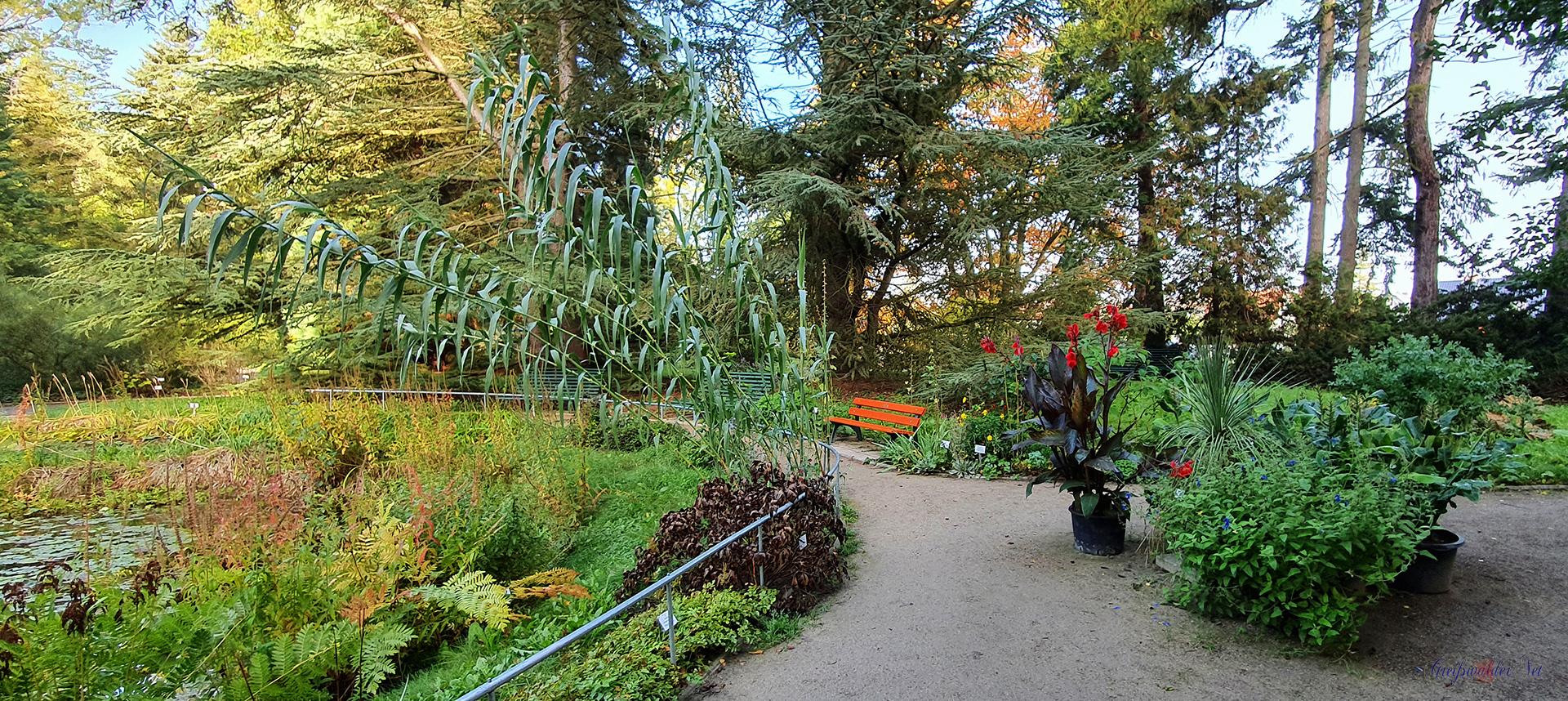 Herbststimmung im Arboretum des Botanischen Gartens Greifswald
