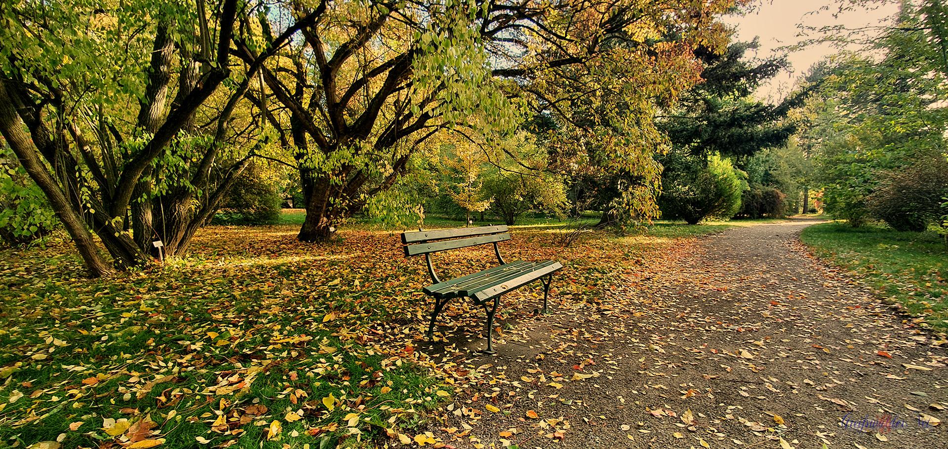 Herbst im Arboretum des Botanischen Gartens Greifswald
