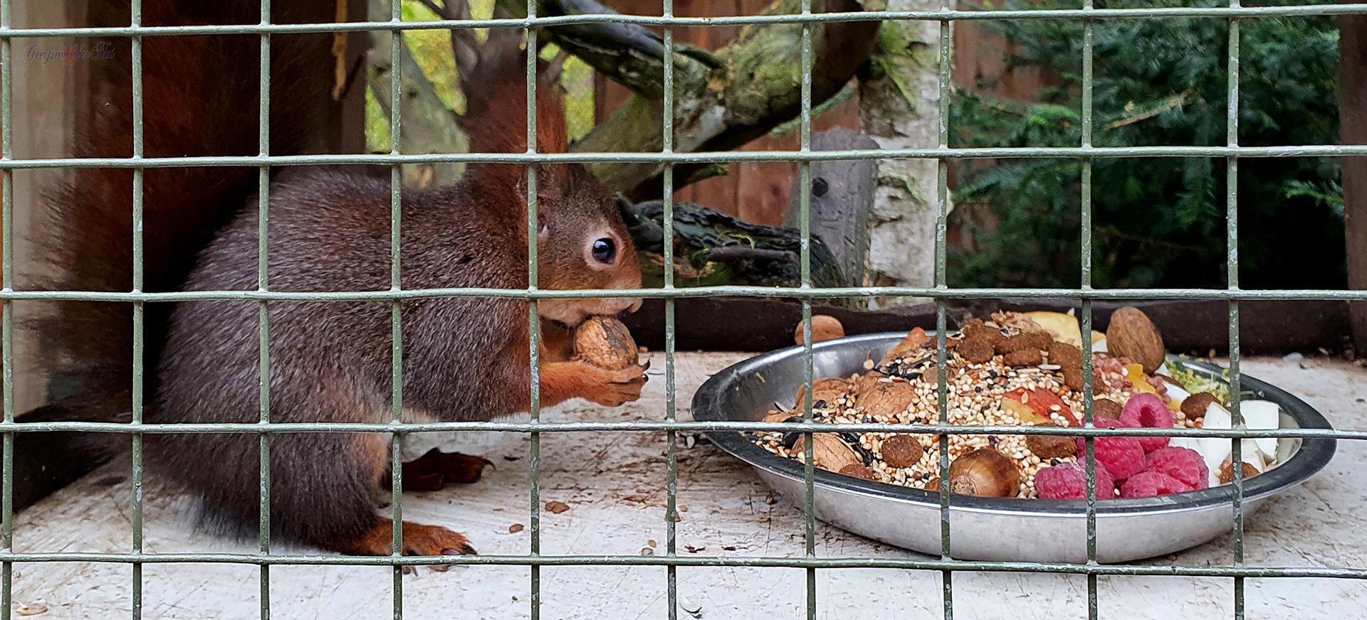 Eichhörnchen Fütterung im Tierpark Greifswald