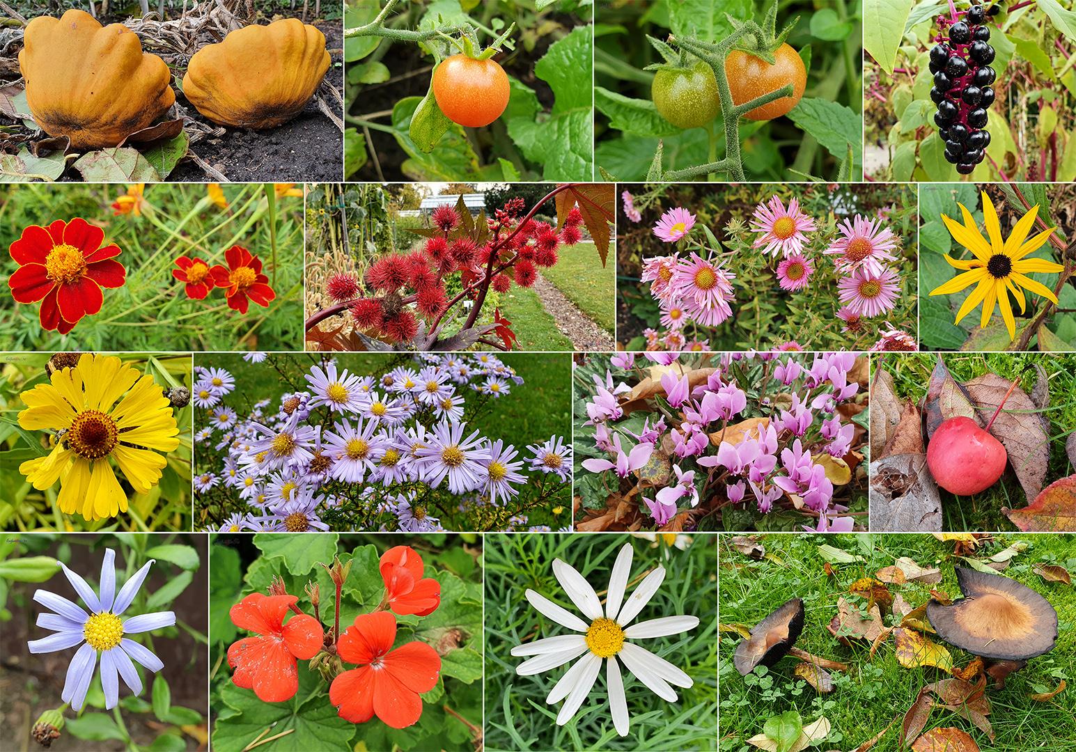 Blüten und Früchte im Monat Oktober im Botanischen Garten Greifswald