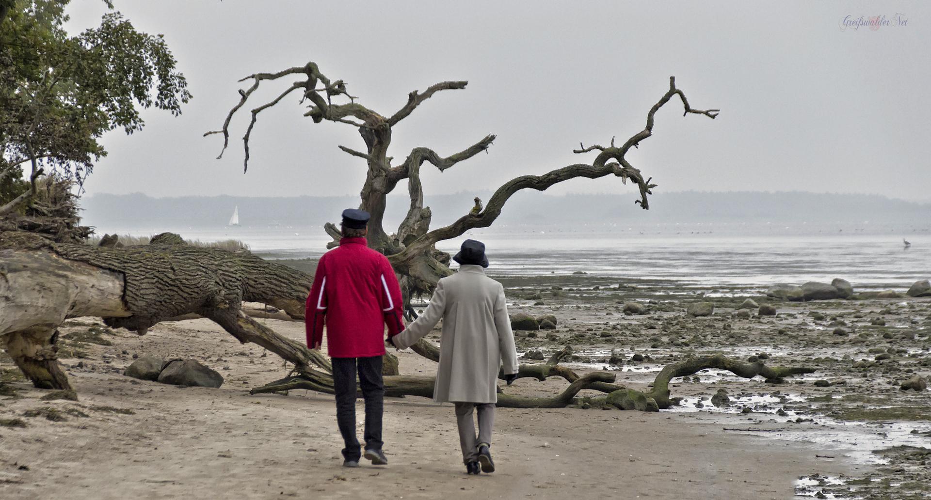 Strandspaziergang, Strand am Greifswalder Bodden – Schlafende Bäume bei Loissin
