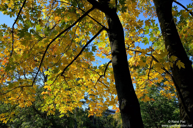 Herbstfarben in Greifswald