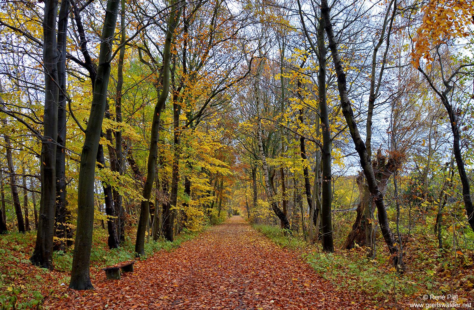 Herbst in Greifswald