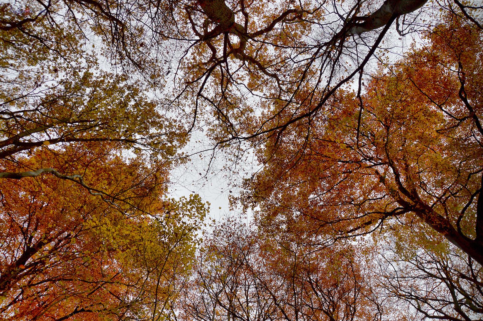 Baumkronen Herbststimmung