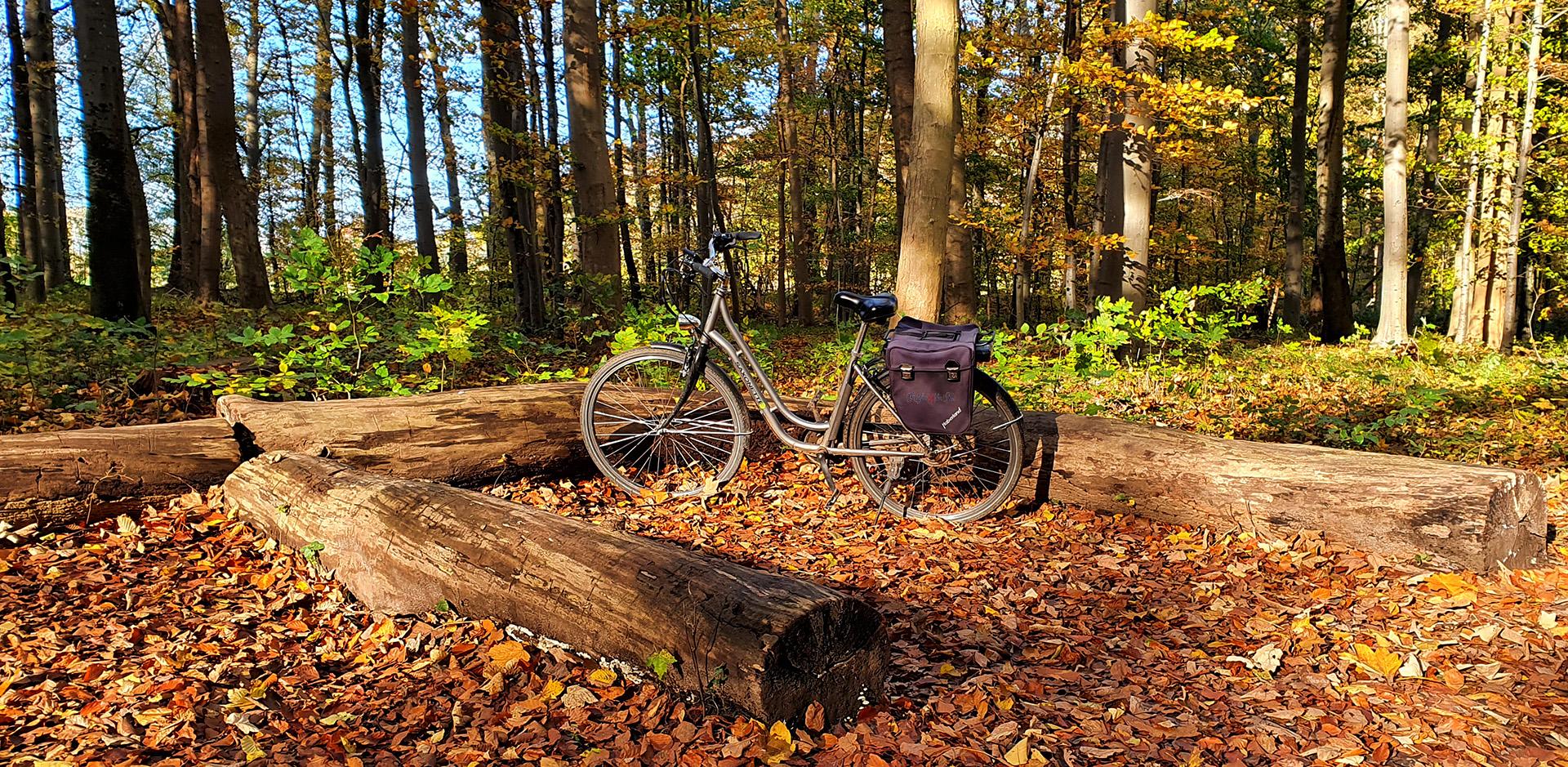 Fahrradtour im herbstlichen Wald, Naturschutzgebiet Eldena, Wald im Südosten der Hansestadt Greifswald in Mecklenburg-Vorpommern