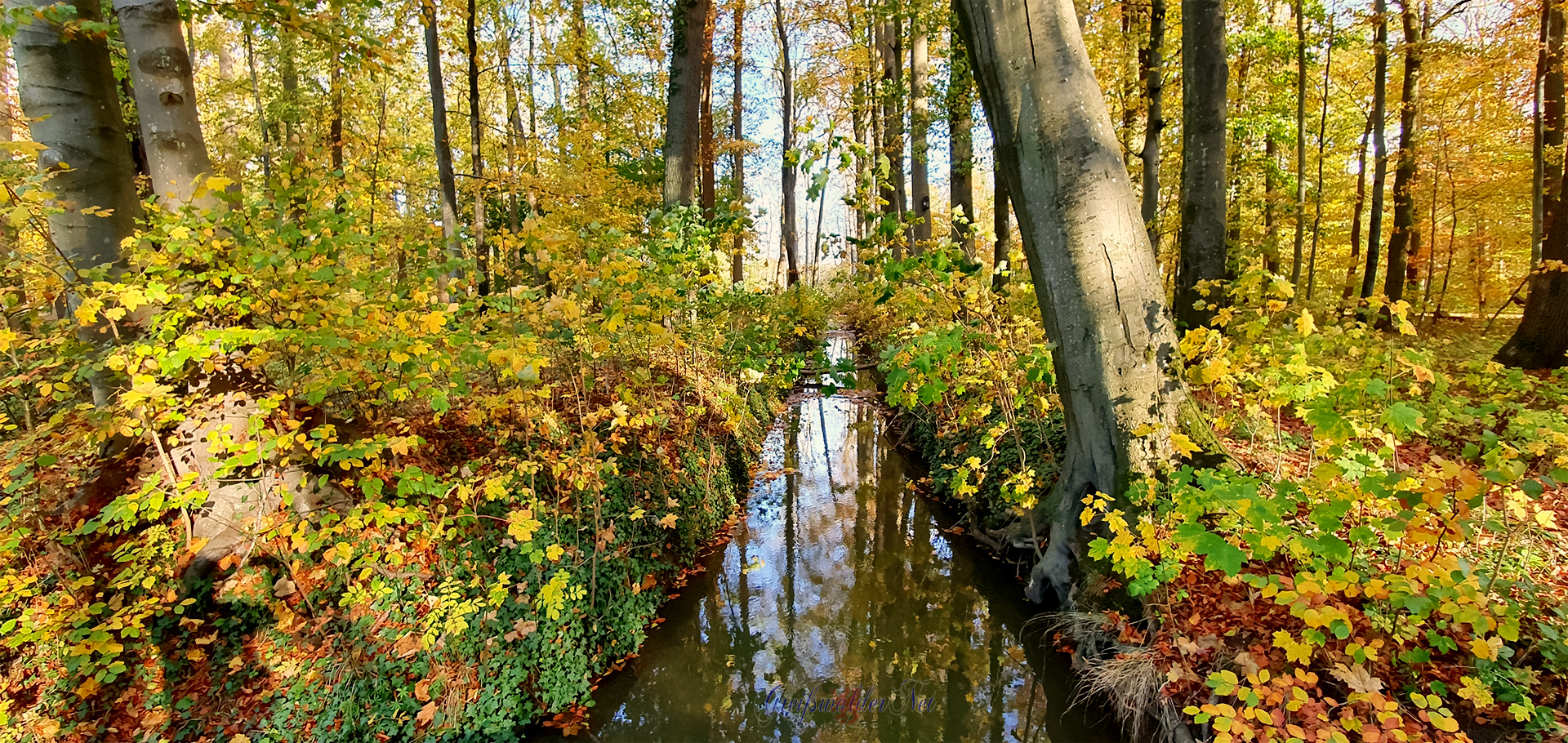 Farbenpracht im Elisenhain, Naturschutzgebiet Eldena, Wald im Südosten der Hansestadt Greifswald in Mecklenburg-Vorpommern