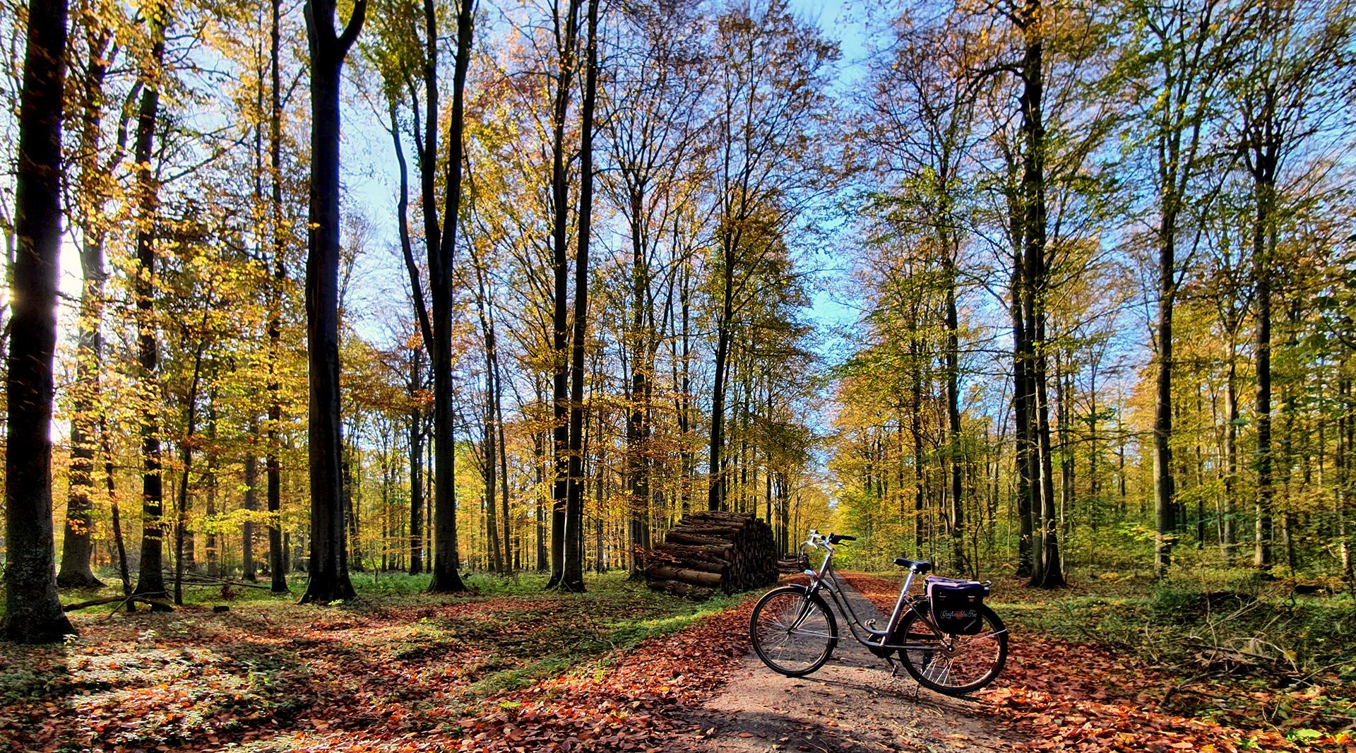 Herrliches Herbstwetter im Elisenhain, Naturschutzgebiet Eldena,  Wald im Südosten der Hansestadt Greifswald in Mecklenburg-Vorpommern