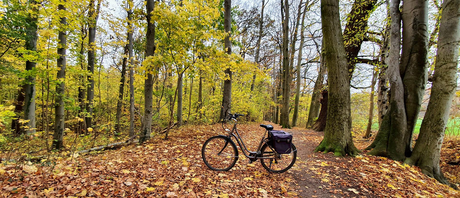 Spazierfahrt im herbstlichen Wald