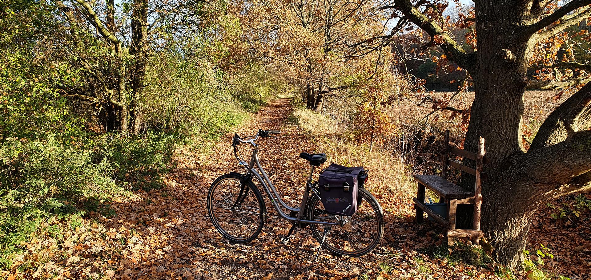 Fahrradtour im Herbst, Herrliches Novemberwetter, Greifswald