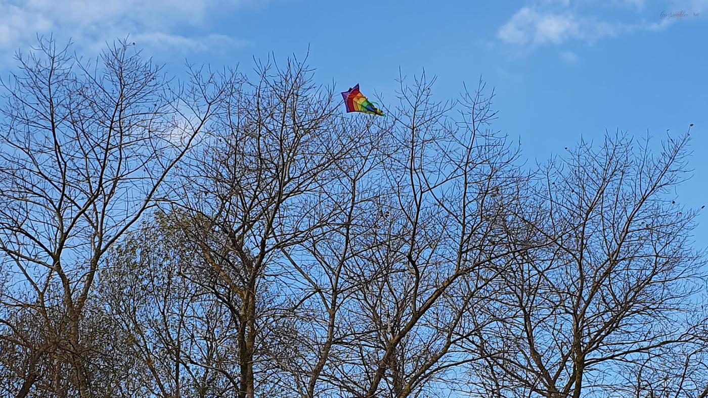 Drachen im Baum verfangen