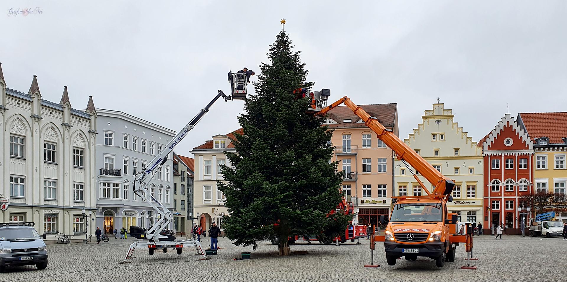 Weihnachtsbaum auf dem Marktplatz Greifswald aufgestellt
