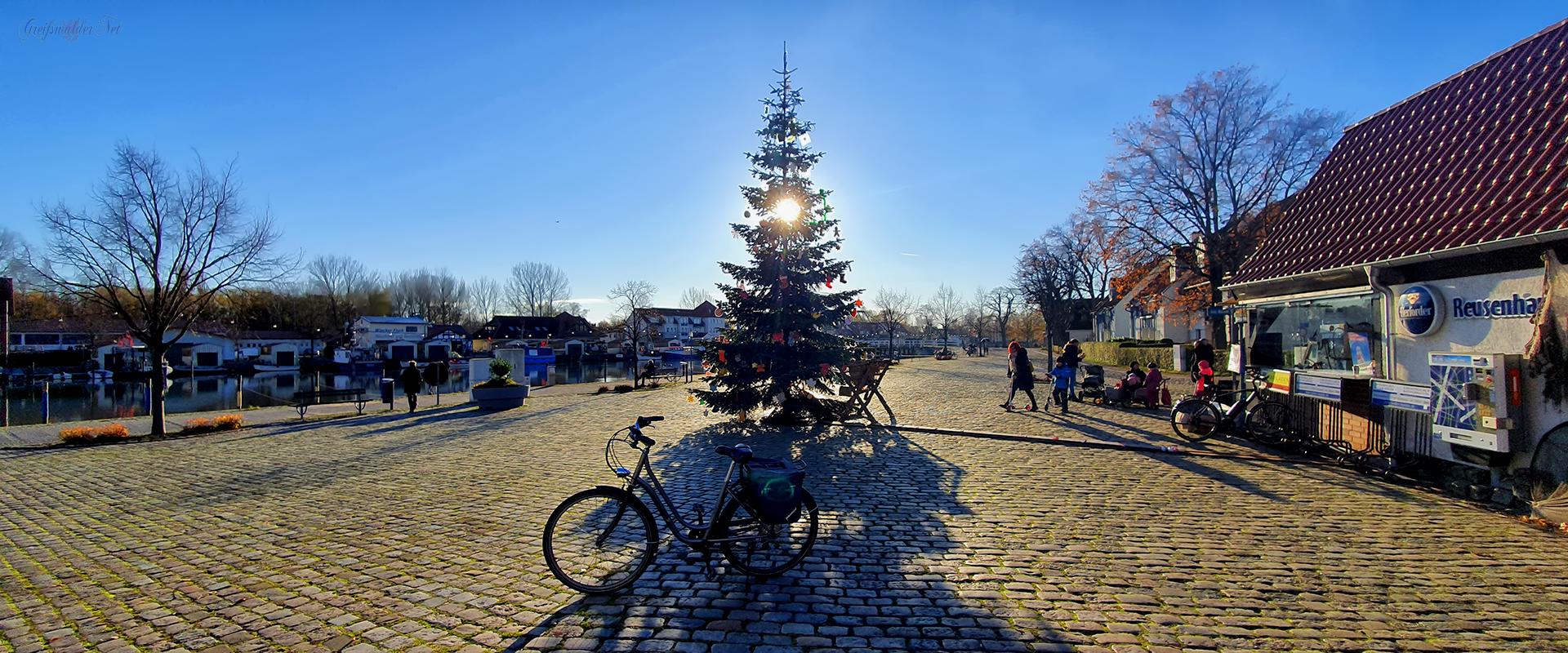 Tannenbaum in Greifswald-Wieck im Gegenlicht